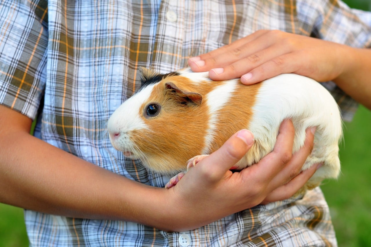 The Best Pet Rodent For Kids – Hamsters, Rats, Or Gerbils