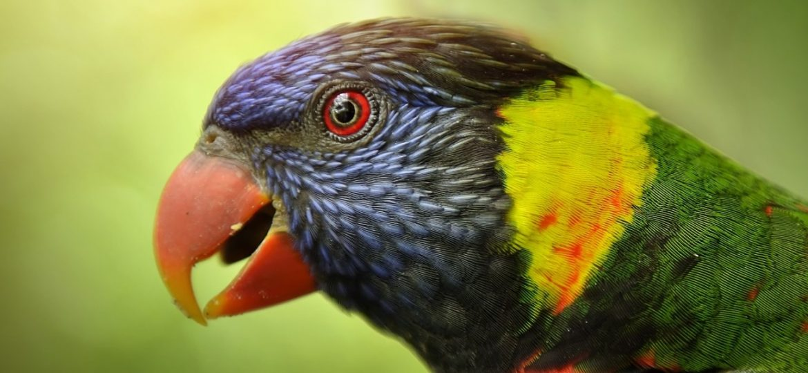 The Most Famous Talking Birds In The World