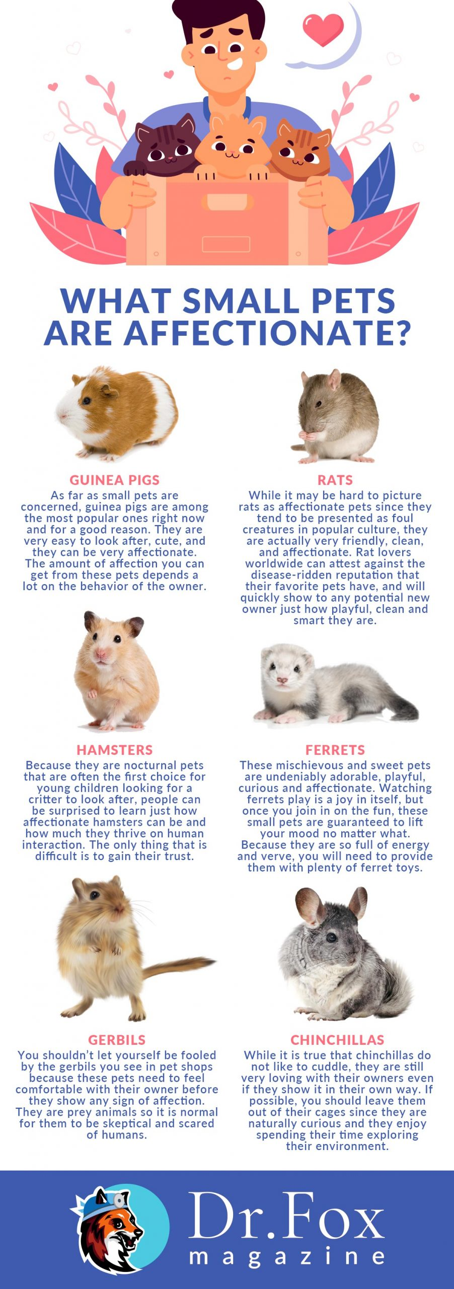 What Small Pets Are Affectionate