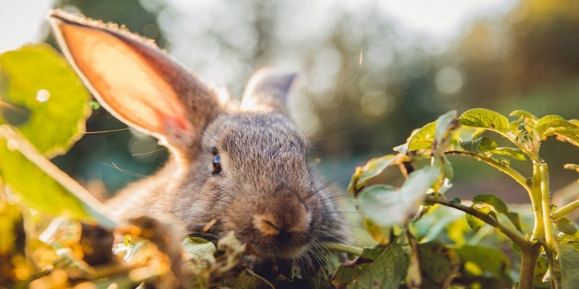 How To Keep Rabbits From Eating Flowers