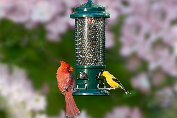 feeders a bird on best the wirecutter balancing feeder clever lowres finch company droll times reviews yellow yankees clean onyx york magnet new by
