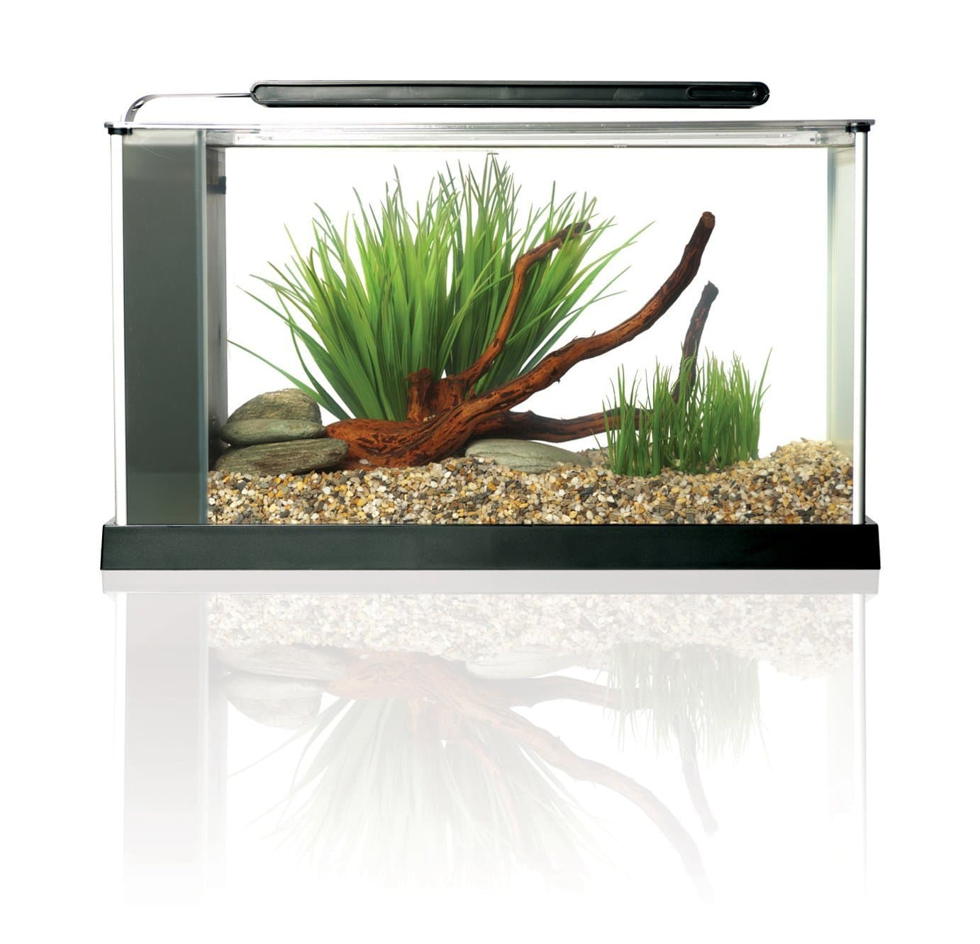 2018 Top 5 aquariums for bettas | Dr. Fox\'s Advice & Reviews