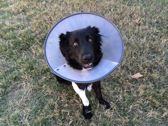 7 Best Dog Cones and Recovery Collars in 2019 – Guide & Reviews