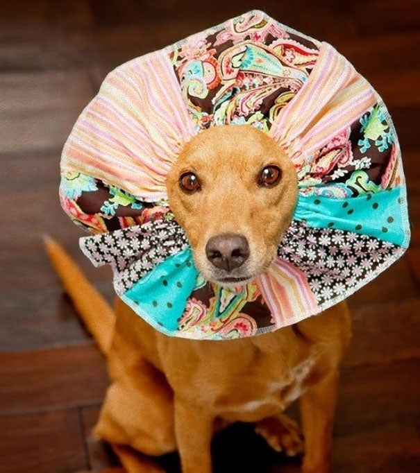 """Great """"cone Of Shame"""" Alternatives"""