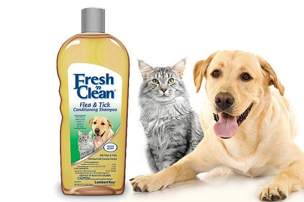 5 Best Flea Shampoos for Cats in 2019 – Guide & Reviews