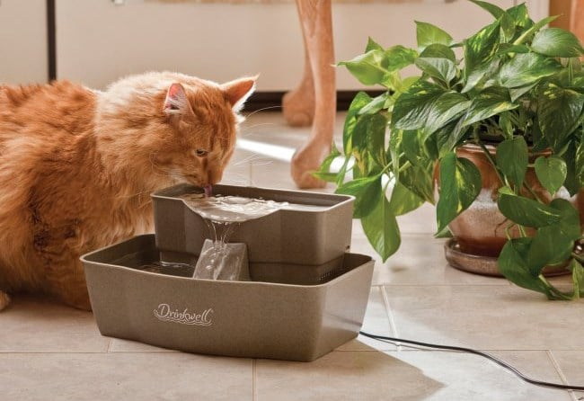Best Rated Water Bowl For Cats