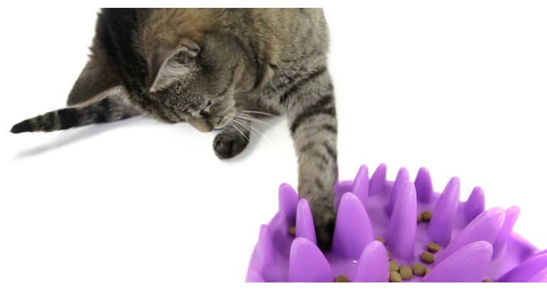 Cat Maze Food Bowl Food
