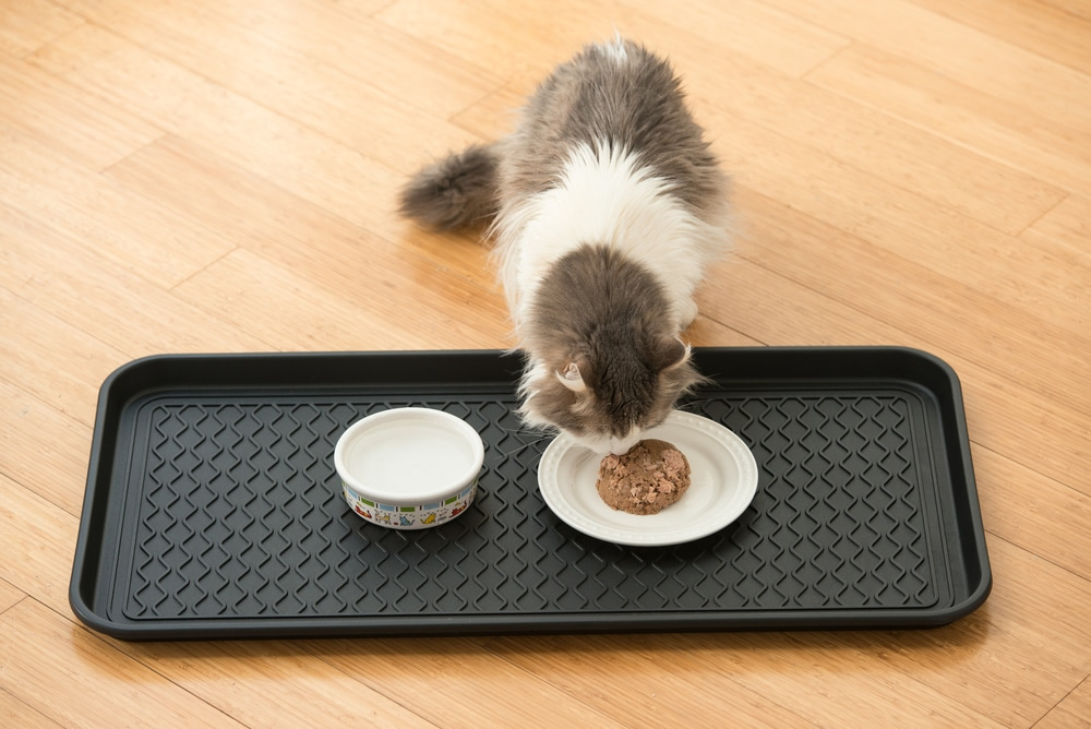 Top 10 Cat Food Mats In 2019 Reviews Comparative Analysis