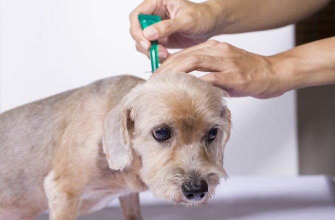 Top 5 Spot On Dog Flea Treatments In 2019 Dr Foxs Picks Advice