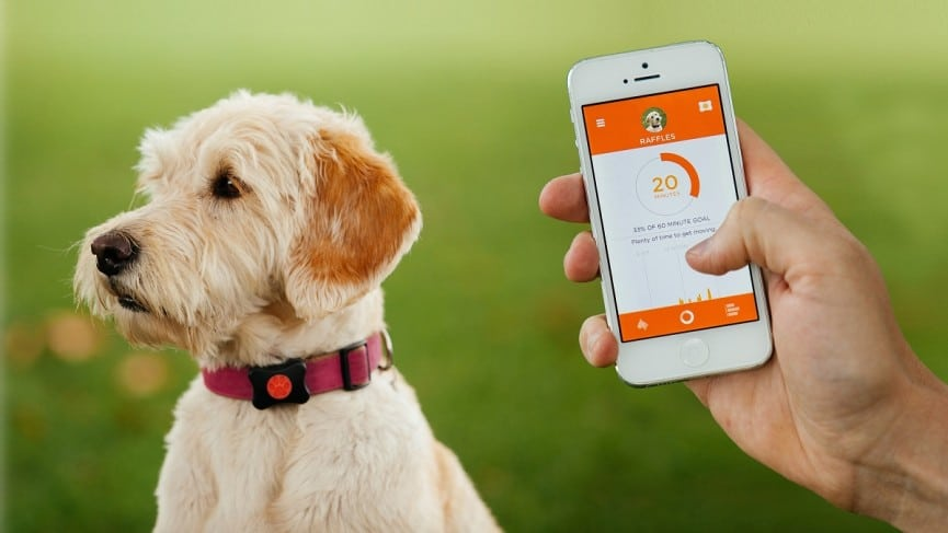 11 Best Dog Gps Trackers Must Read Reviews For January 2020