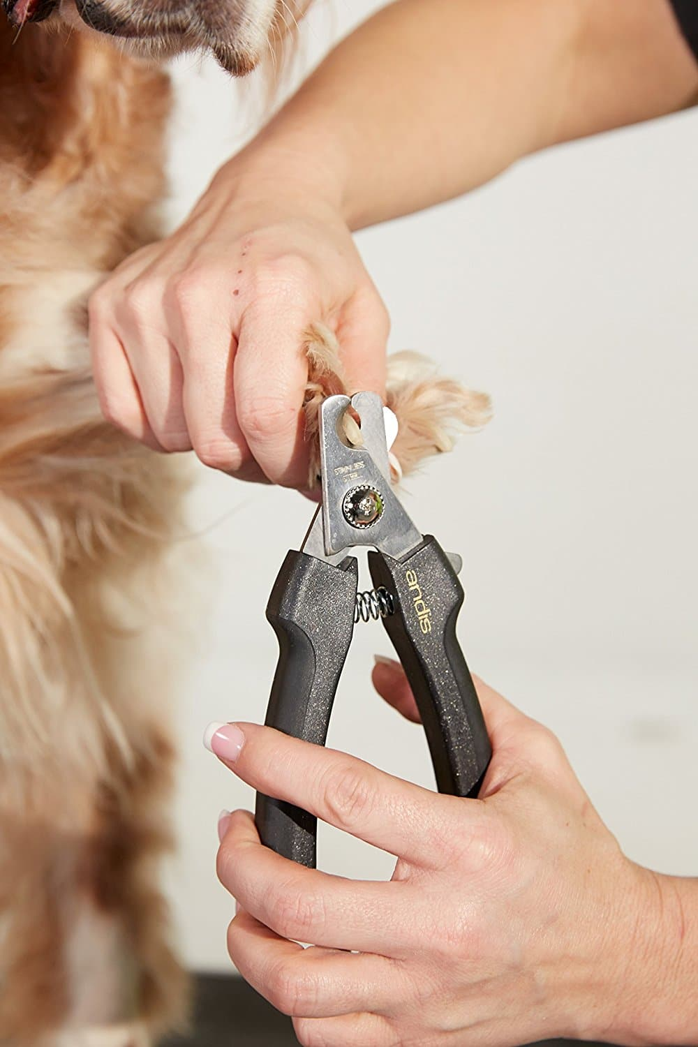 2018 Top 15 Nail Clippers for Dogs | Dr. Fox\'s Reviews & Advice