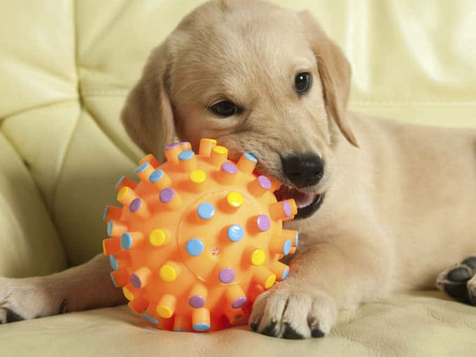 Top 15 Toys For Teething Puppies In 2019 Dr Foxs Picks Advice