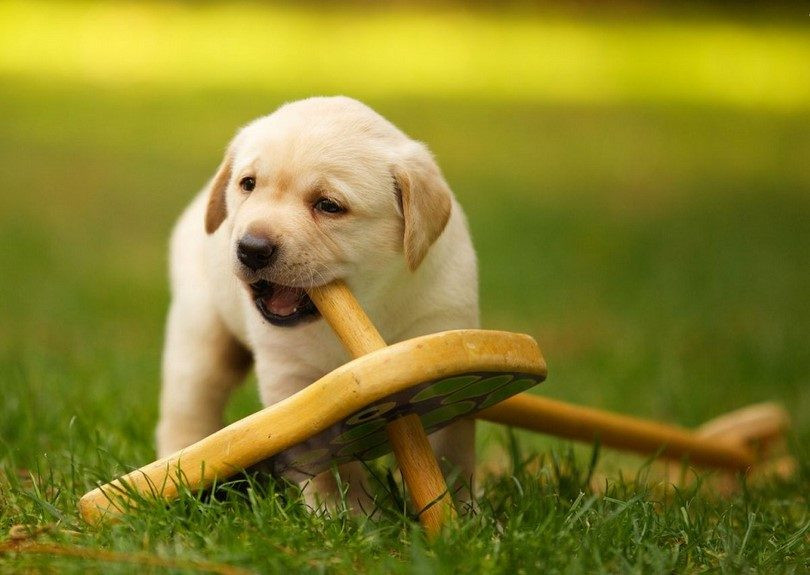 Homemade Dog Chew Toys For Aggressive Chewers
