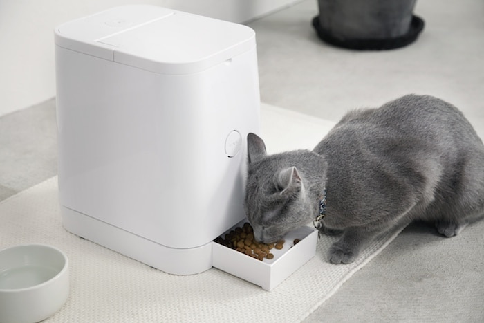 world plus s for eating cats automatic pet cat feeder brando feedster product