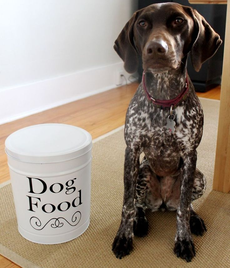 Best Containers To Store Large Quantities Of Dog Food