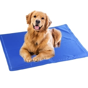 14 Best Dog Cooling Pads Must Read Reviews For December