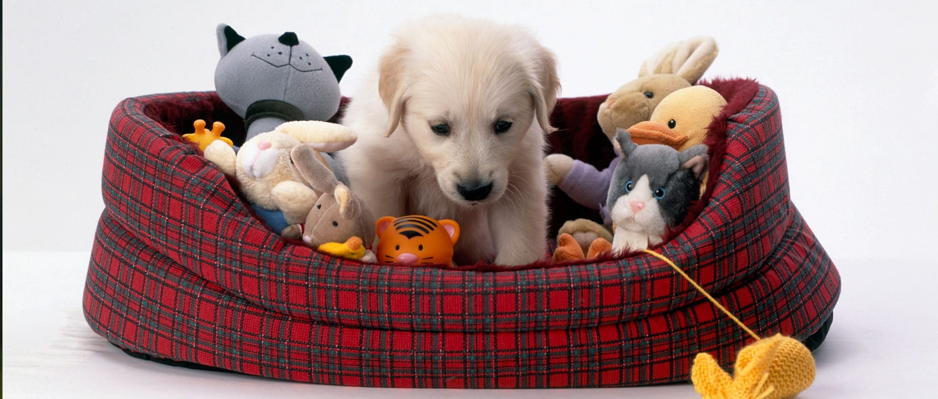 How to select the right chew toy for your dog | Healthy Chew Toys For Dogs