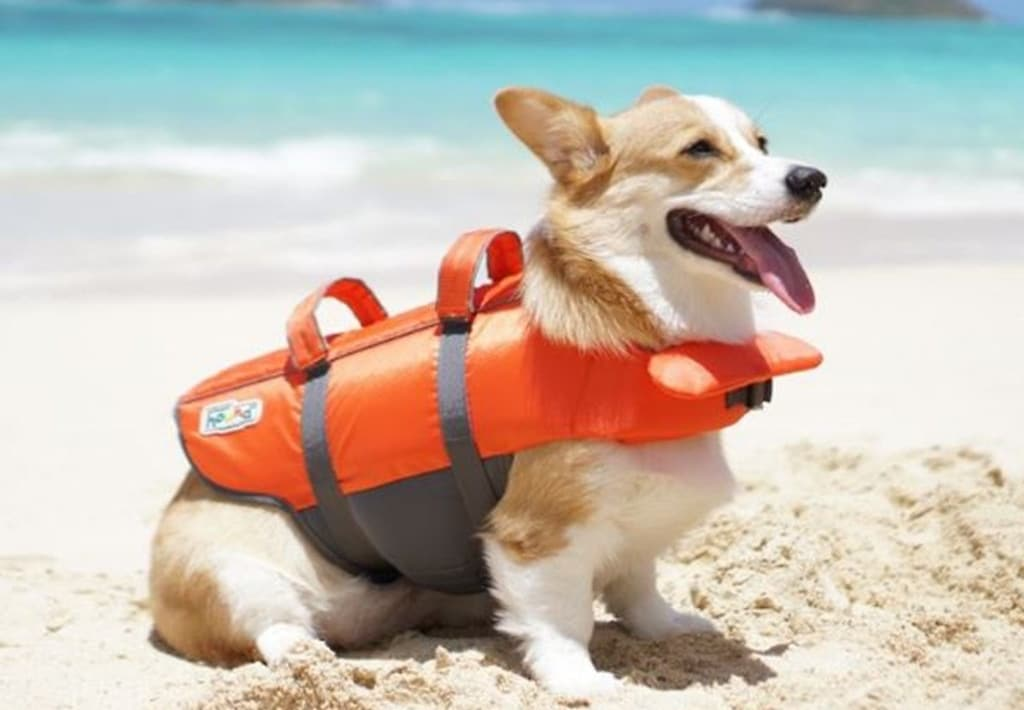 Top 5 Extra Small Dog Life Jackets Of 2019 Reviews Comparative
