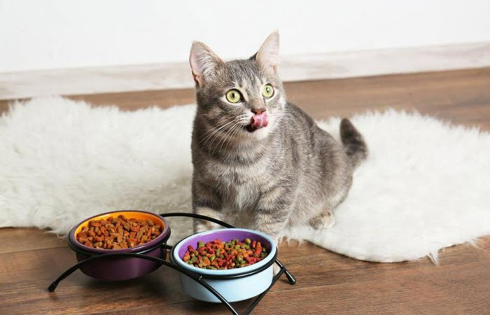 Top 17 Dry Cat Foods | Dr  Fox'S Picks & Advice For