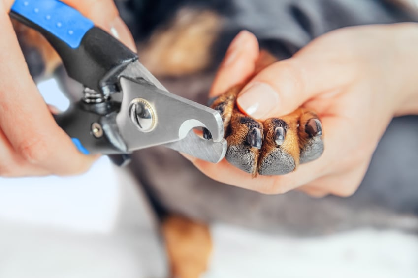 How to clip your dog\'s nails the right way