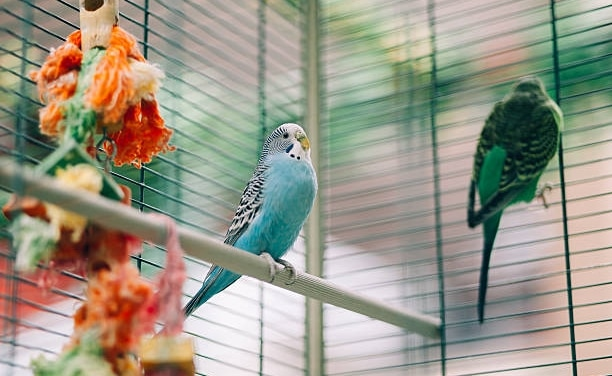5 Best Bird Houses For Parakeets (Must Read Reviews) For