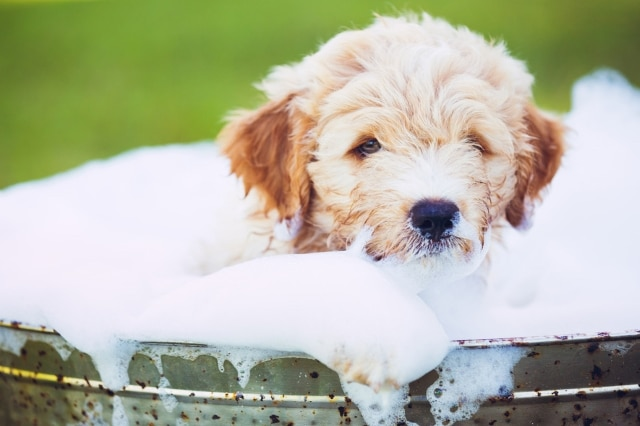 Top 5 Puppy Shampoos For Dry Skin In 2019 Dr Foxs Picks Advice