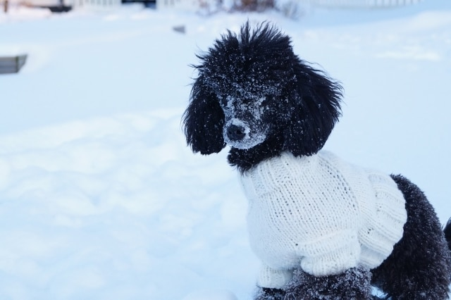 ▷ 5 Best Dog Sweaters For Winter (Must Read Reviews) For