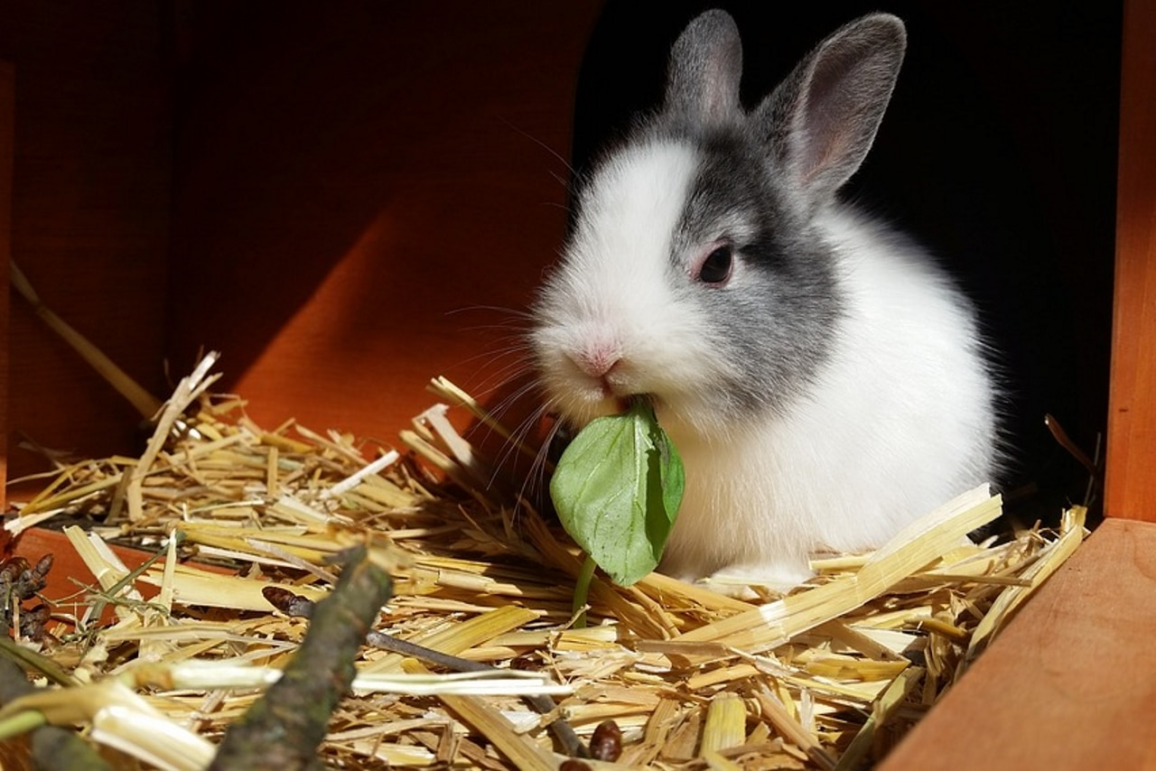 What To Feed Baby Rabbits — Rabbit Care Tips