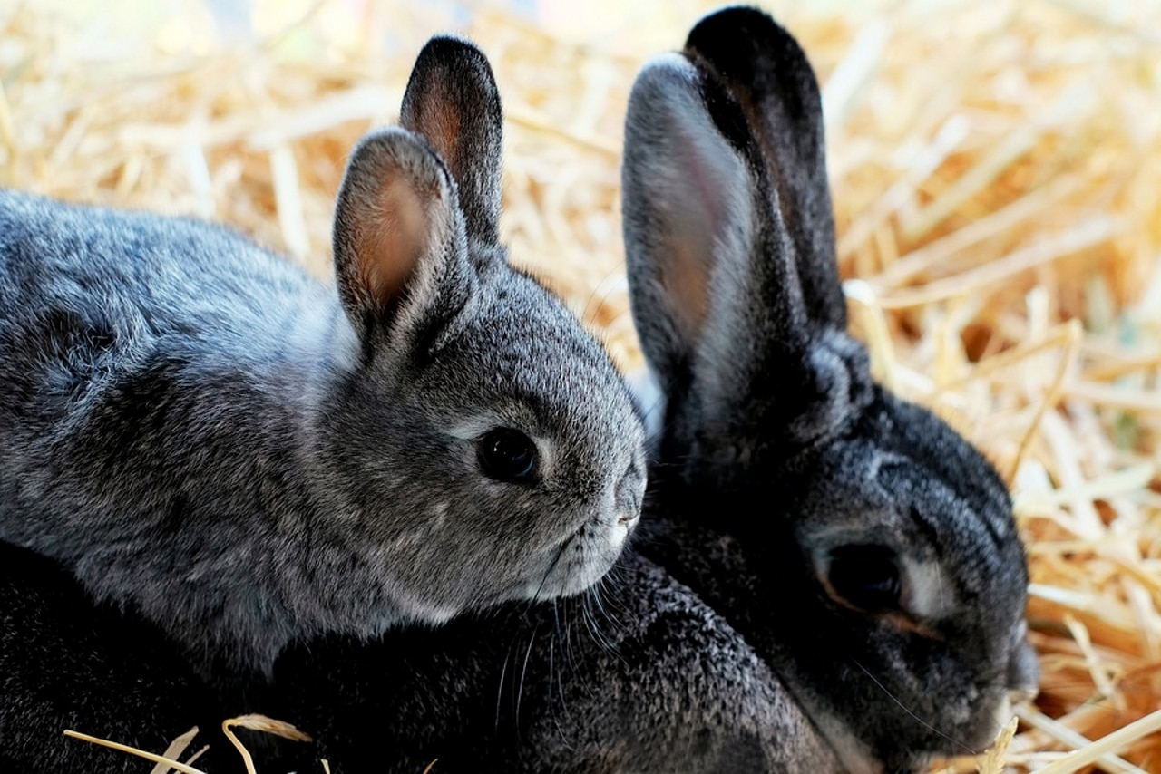 2019 Top 5 Rabbit Bedding For Winter Dr Fox S Advice Reviews