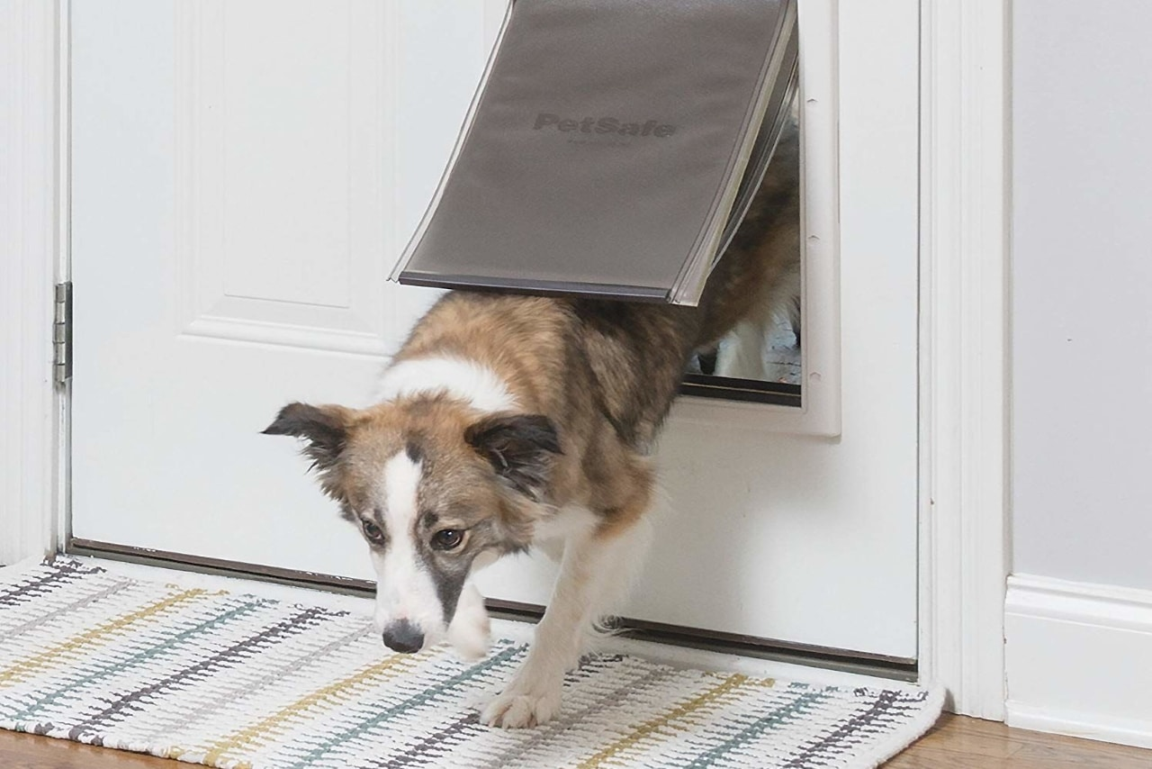 5 Best Dog Doors For Cold Weather In 2019 Dr Foxs Picks Advice
