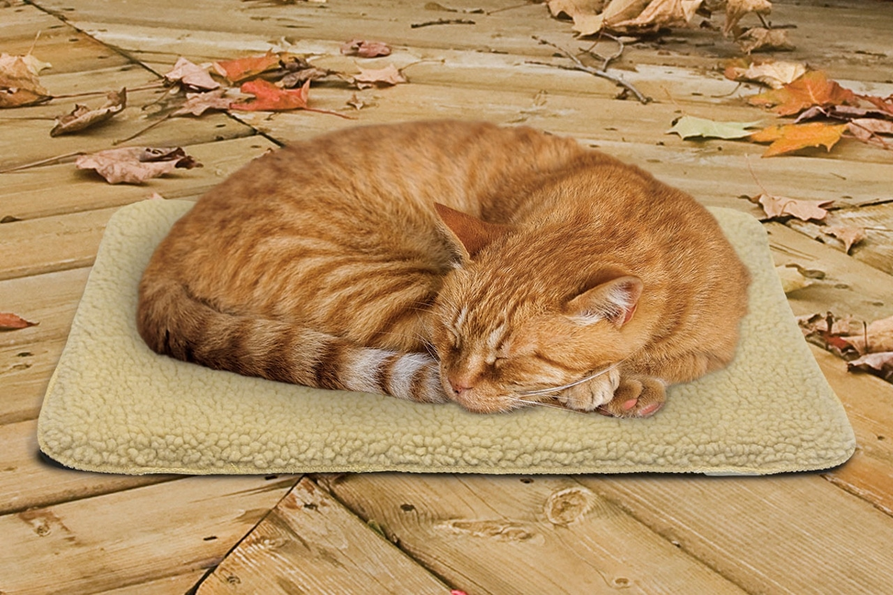 5 Best Outdoor Heating Pads For Cats 2019 Comparative Ysis Reviews