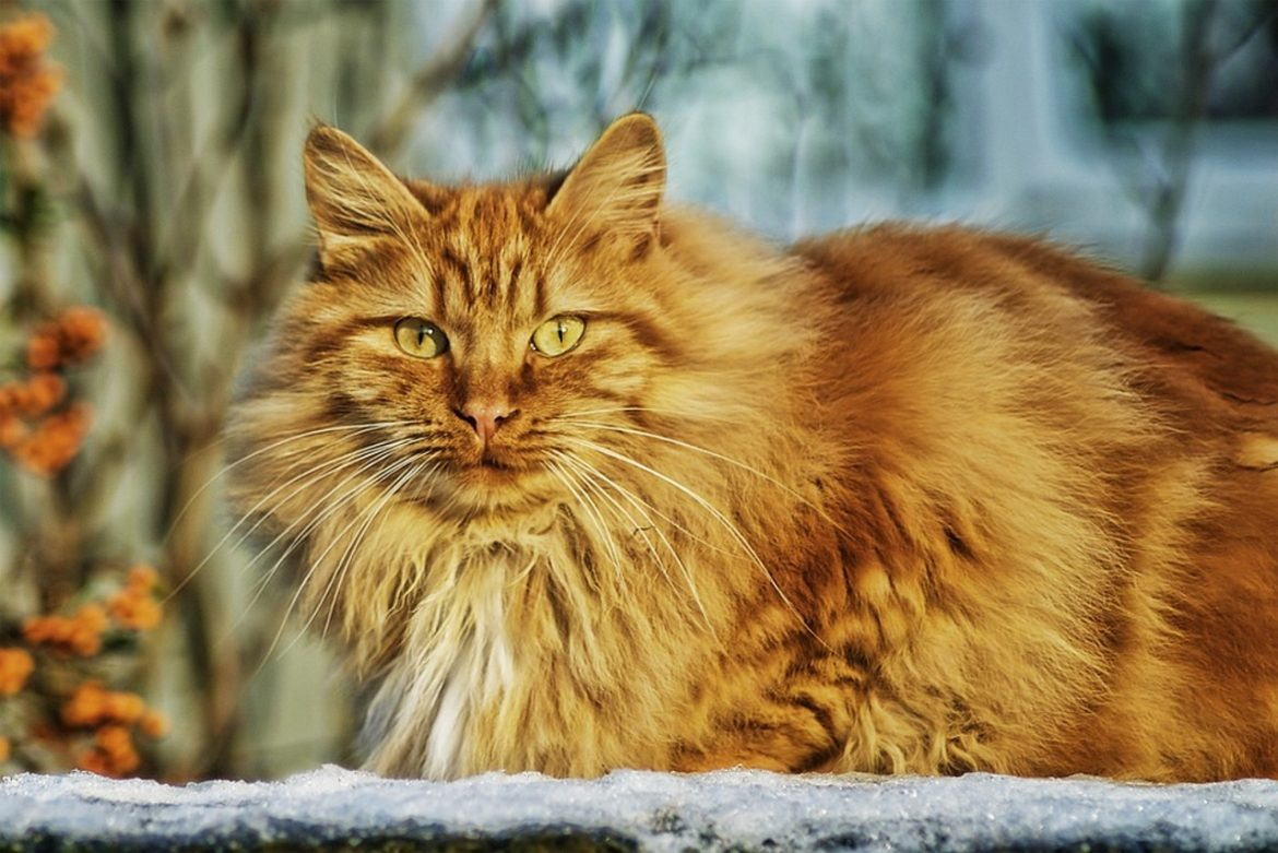 How Long Do Cats Live And Other Interesting Facts
